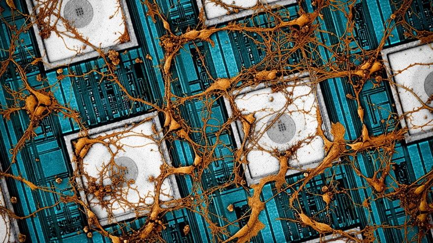 Samsung vuole fare un copia-incolla del nostro cervello: la rivoluzionaria ricerca con Harvard