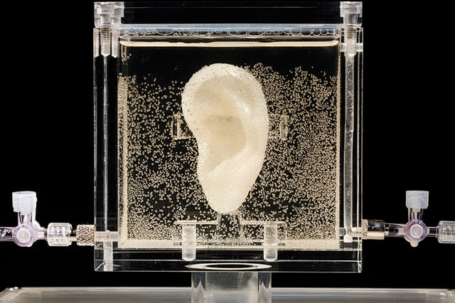 Germany Van Gogh's Ear