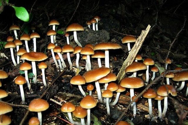 Come i funghi aprono la mente