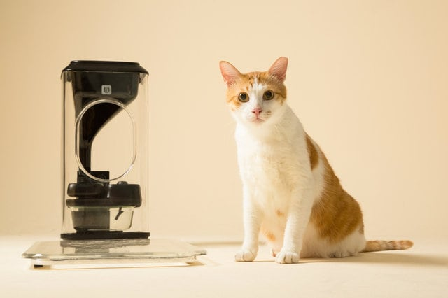 Il gatto a dieta grazie al riconoscimento facciale (video)