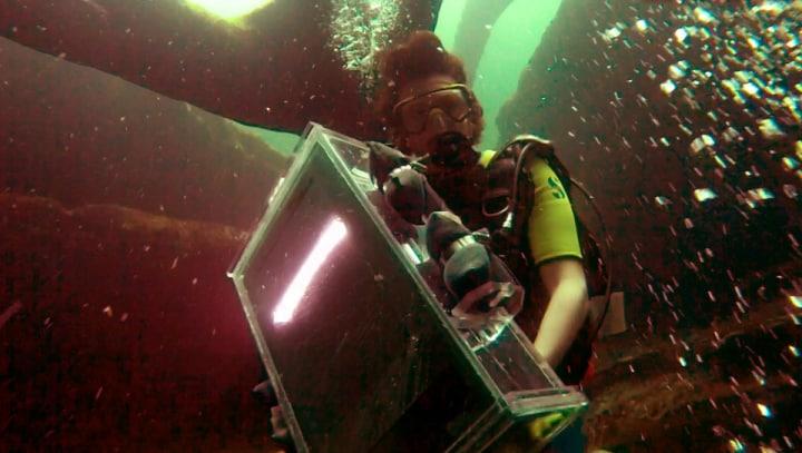 Foto subacquee artistiche, realizzate con uno scanner impermeabililizzato