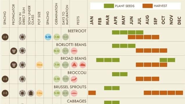 infografica giardinaggio