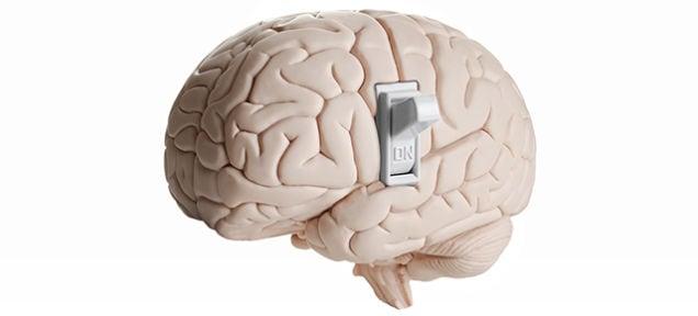 Scienziati scoprono l'interruttore che spegne il cervello