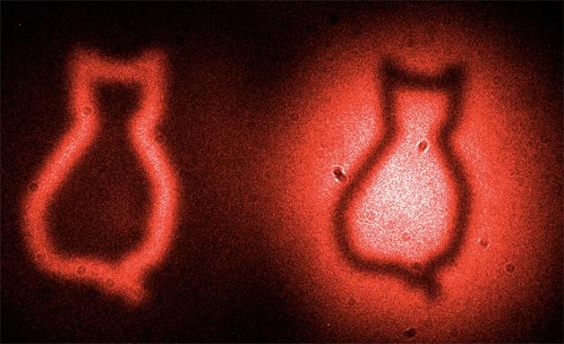 Il gatto quantico che fa concorrenza a quello di Schrödinger