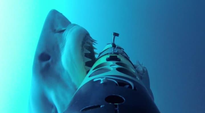 squali all'attaco
