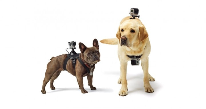 video dal punto di vista del cane gopro