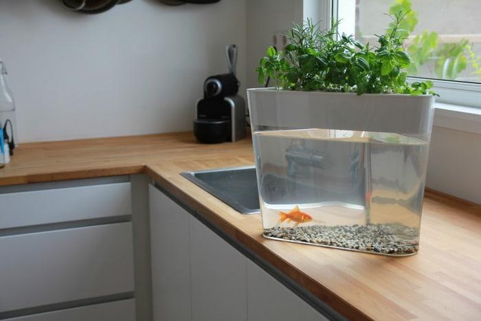 Un orto idroponico in casa con gli scarti dei pesci - Colture idroponiche in casa ...