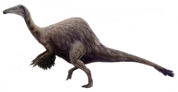 dinosauro strano Deinocheirus