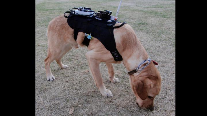 dogbot indossabile cani