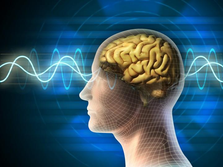 cervello brain fhd