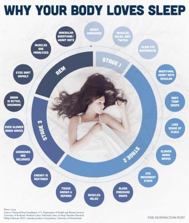 infografica sonno