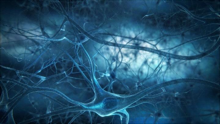 neuroni fhd