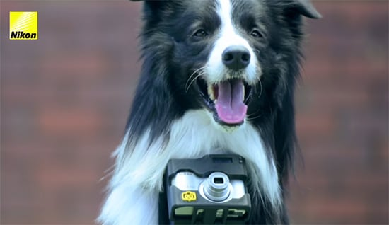 nikon supporto fotocamera cane