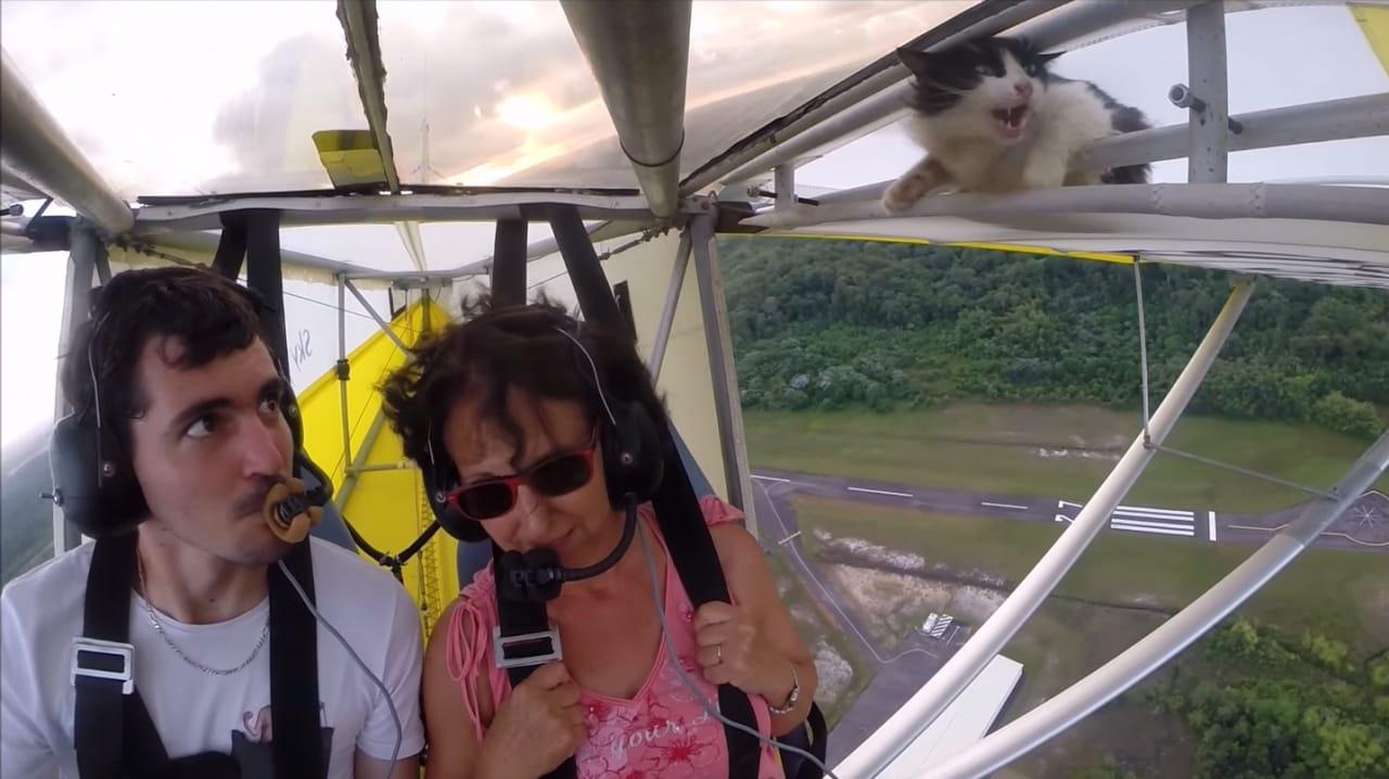 Gatto volante head