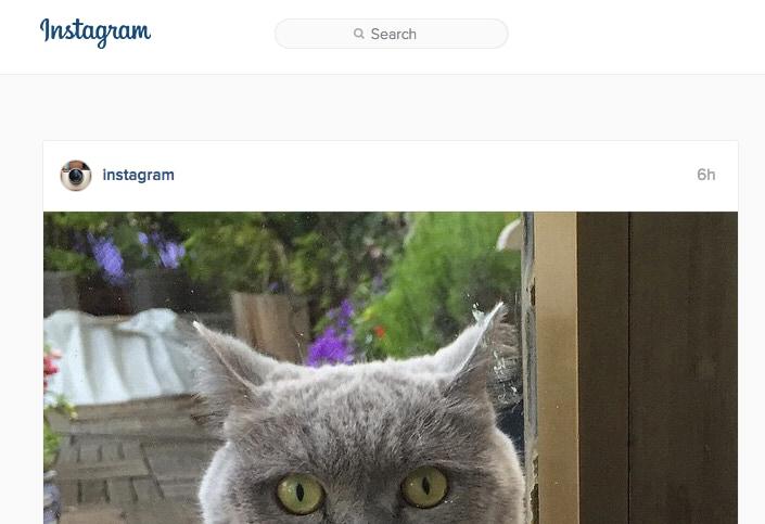Instagram ricerca