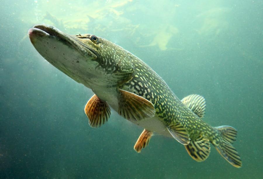 gofish action cam pesca