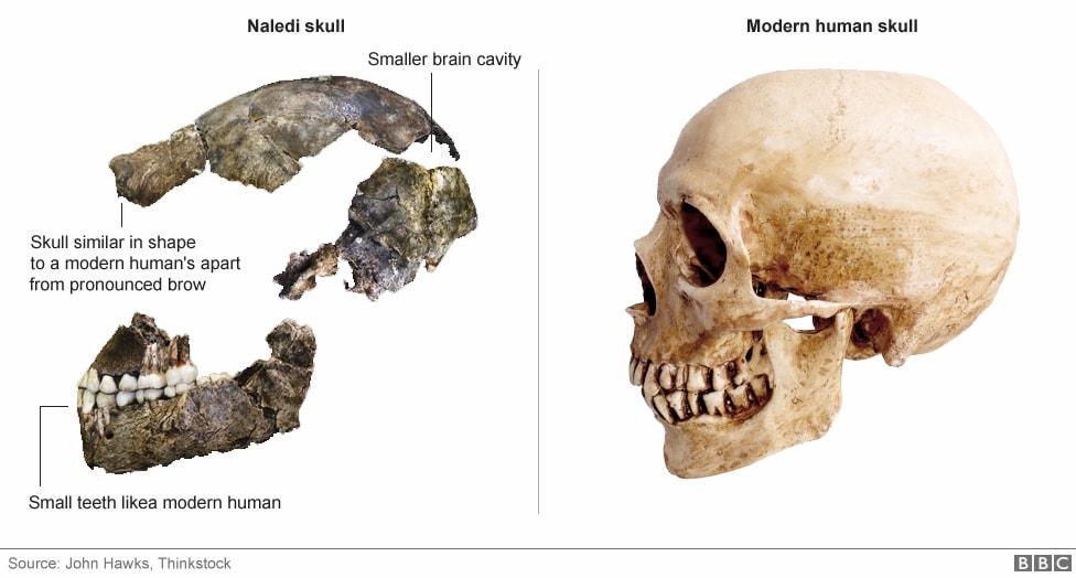 Homo naledi_4