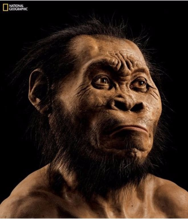 Homo naledi: un nuovo tassello nel puzzle dell'evoluzione  (foto)