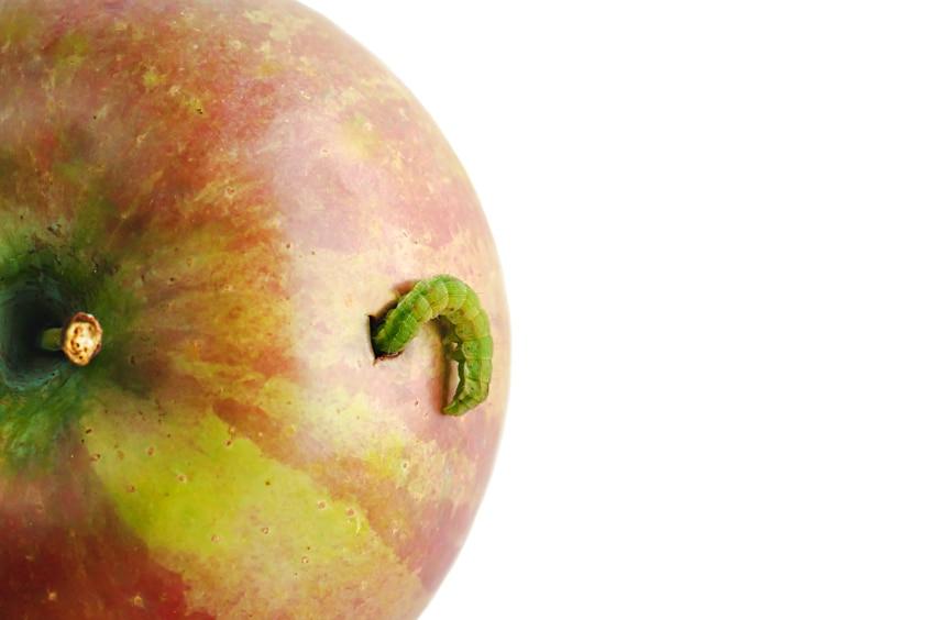 mela bacata apple istock