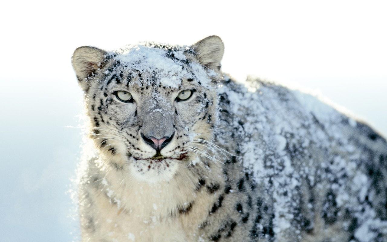 snow leopard 10.6 final os x mac