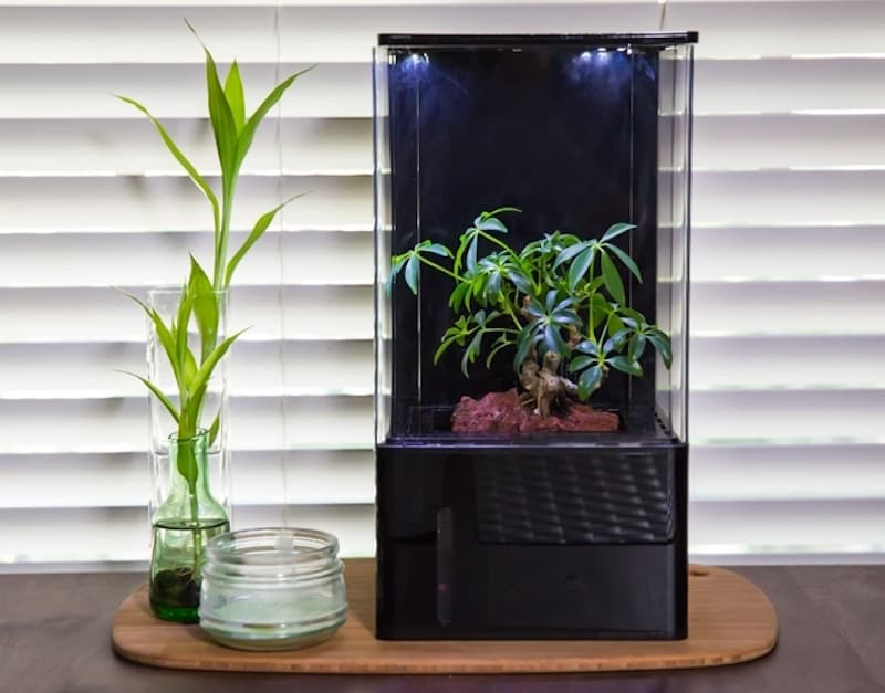 Questa piccola serra smart promette di purificare l'aria della vostra casa