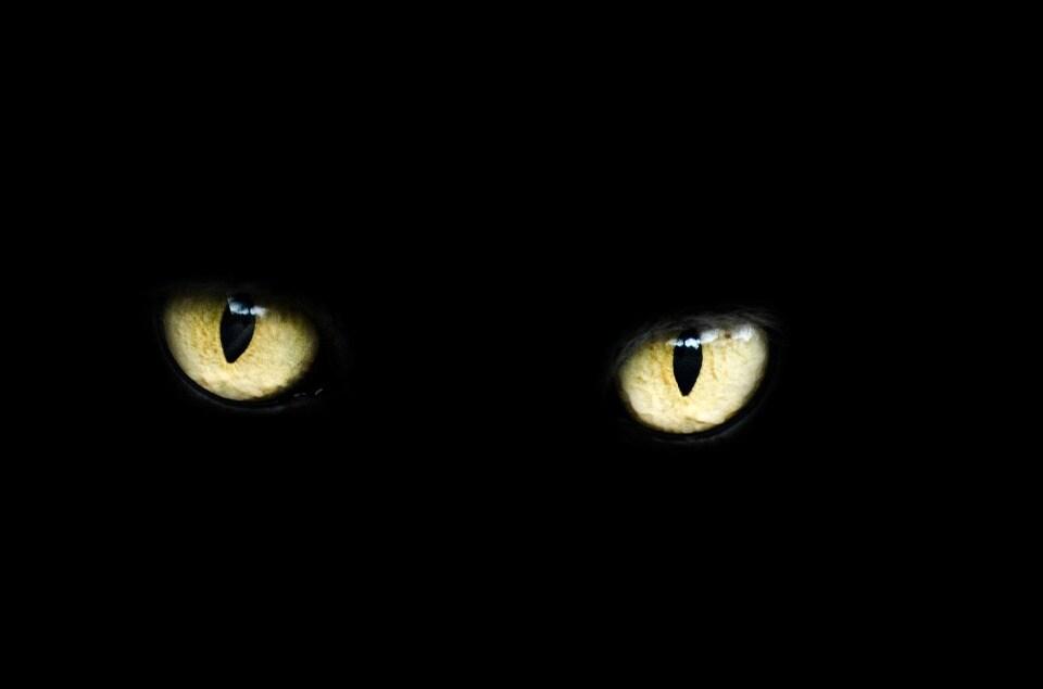 Le self-driving di Ford hanno un occhio laser per vederci al buio (video)
