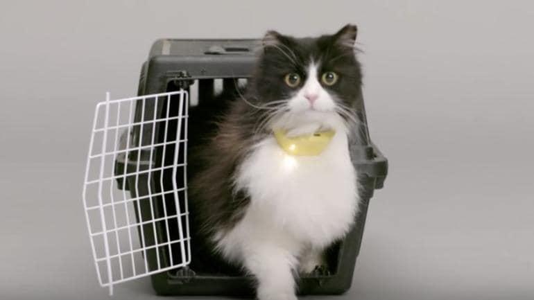 Catterbox, il collare che traduce i miagolii e vi permette di comprendere il vostro gatto (video)