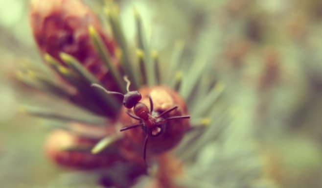 Anche una formica è più bella, alla giusta risoluzione.
