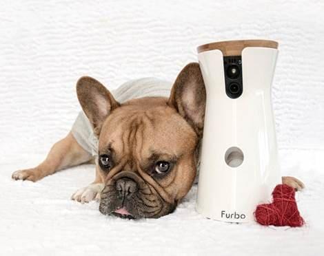 furbo-videocamera-cani-01