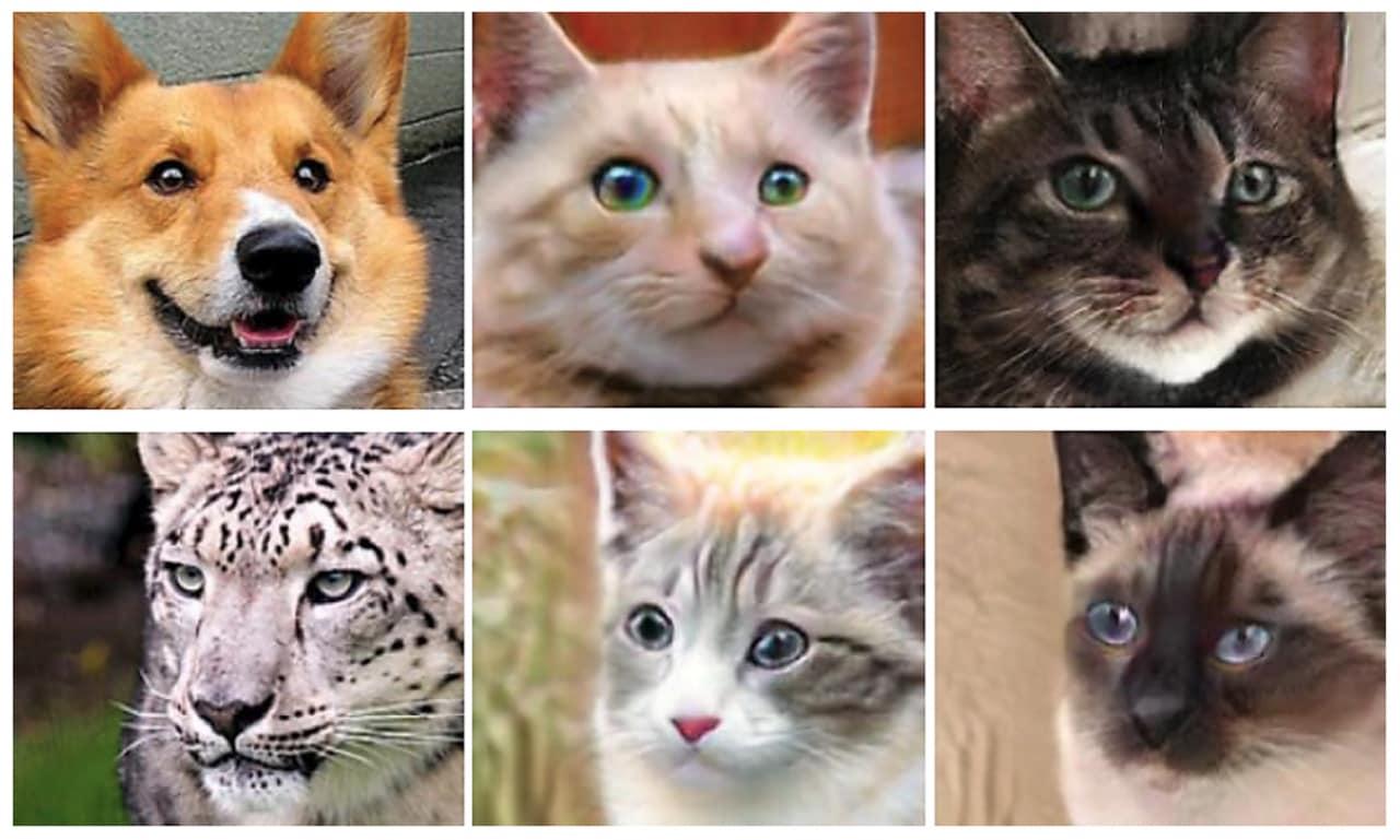 NVIDIA può trasformare in vostro cane in tanti gatti (video)