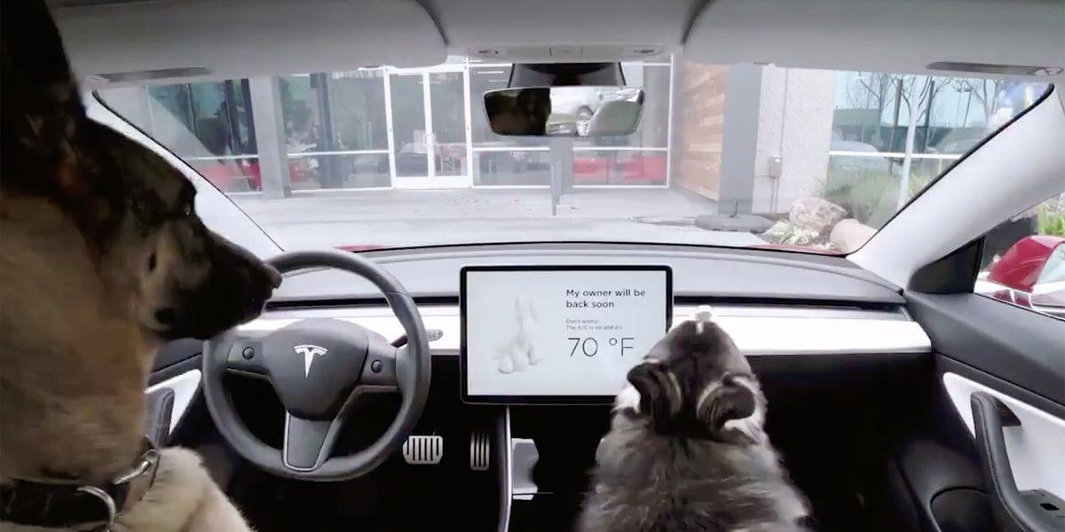 La vostra Tesla ora si prende cura di se stessa e dei cani mentre siete via! (video)