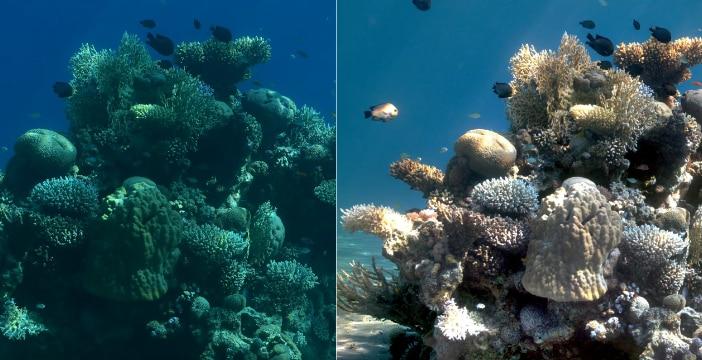 Foto subacquee senz'acqua? Non è magia, è un algoritmo (foto e video)