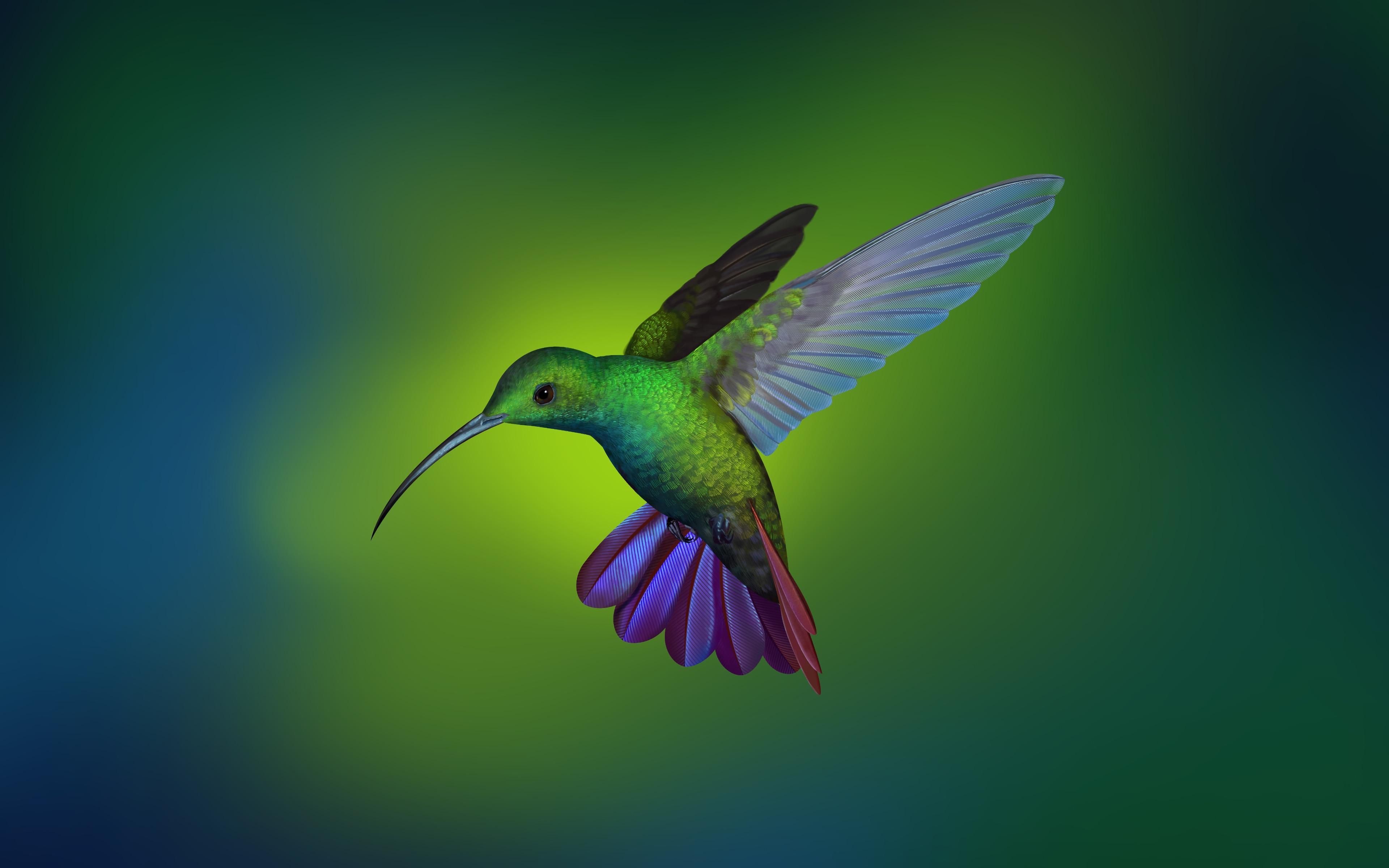 Hummingbird_by_Shu_Le