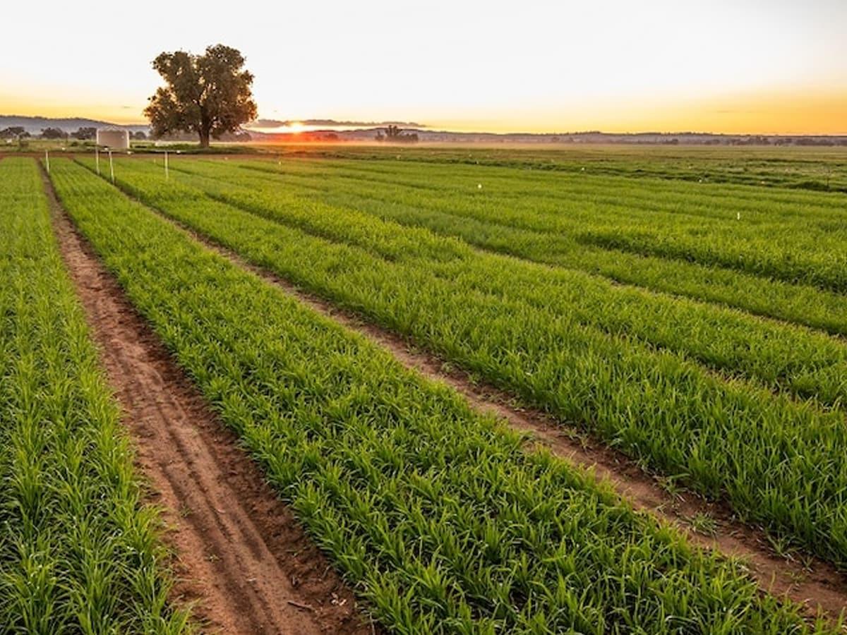 In Australia la prima fattoria automatizzata gestita interamente da robot